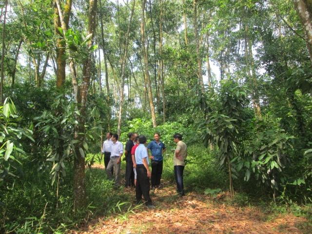 Tham quan mô hình trồng rừng